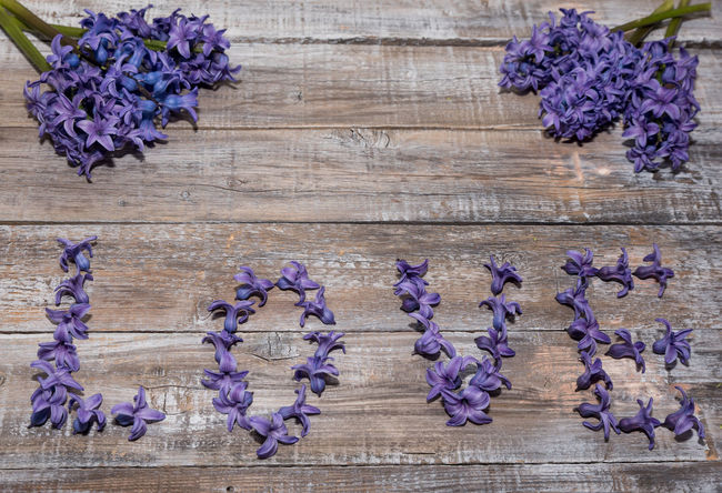 Blooming purple Hyacinthus on vintage wooden board. Love concept Hyacinthus Orientalis Beauty In Nature Blue Bouquet Close-up Day Flower Flower Head Fragility Freshness Hyacinth Hydrangea Indoors  Lavender Lilac Nature No People Petal Plant Purple Scented Wood - Material