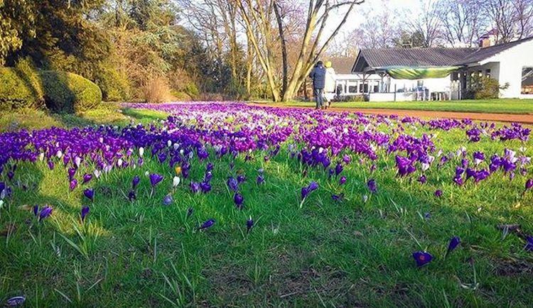 Весна уже так близко Flowers Blumen Spring Frühling Park Nordpark Düsseldorf Ddorf Ddorfcity Dusseldorf_de Nordrheinwestfallen NRW Travel Travel_2_germany Winter2016 Winterindeutschland последнийденьзимы Germany Deutschland Europe