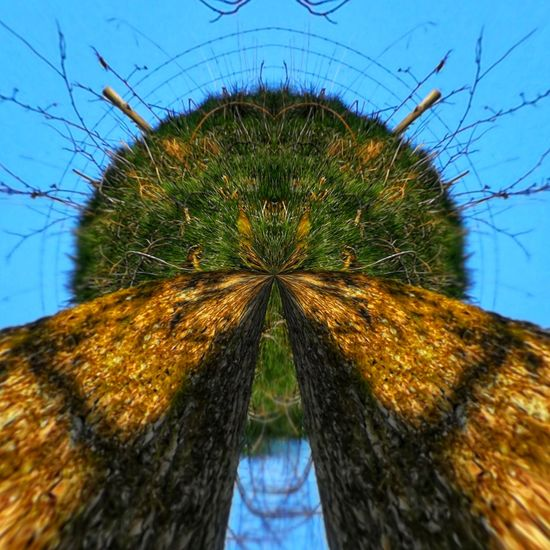 Little Planet Tree And Grass Wierd Tree Sky Close-up