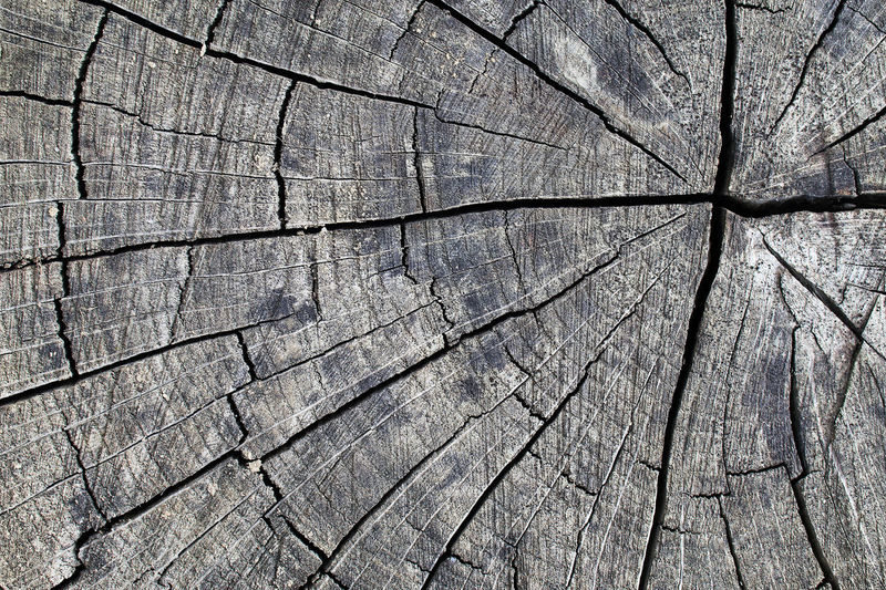 Abstract Abstract Photography Abstractart Background Background Photography Backgrounds Close-up Day Full Frame Nature No People Outdoors Textured  Tree Stump Wood Wood - Material Wooden