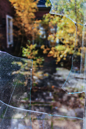 Krampnitz Glass - Material Broken Glass Focus On Foreground Plant Nature Day No People Tree Growth Autumn Herbst Fenster Window Trzoska Leaf Glass Selective Focus Transparent Outdoors