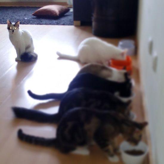 A ensinar à mais nova que esquisitice é sinónimo de fome.... Pantufathecat Panterathecat Kokasthecat Cookiethecat Cheetathecat Sandokanthecat Catlovers Catsagram Cat