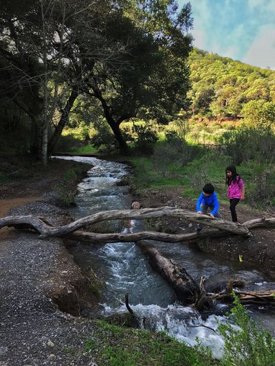 Let's Cross Real People Water Nature Tree Outdoors Childhood Beauty In Nature Day Marin County CA Arroyo De San JoseMarin Waterfall Hike