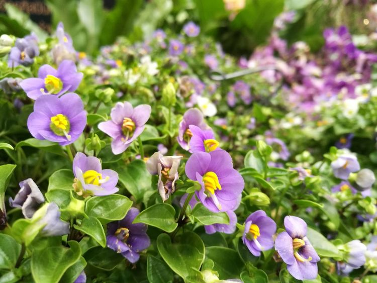 Flower Growth Freshness Purple Blooming Plant Nature Flower Head No People Focus On Foreground Close-up Beauty In Nature