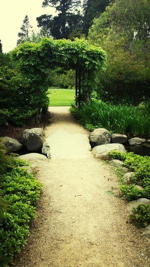Botanical Gardens Dunedin NZ