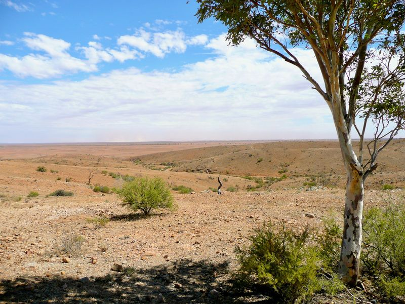 Breathing Space Central Australia Freedom Plants Space To Breath Beauty In Nature Grass Horizon Over Land Landscape Nature No People Outdoors Remote Sand Dune Scenics Semi Arid Climate Semi-desert Sky Tranquil Scene Tranquility Tree