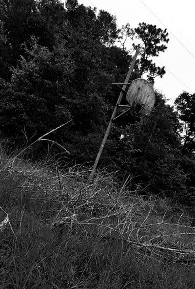 memories Nastalgia Black Blackandwhite Tree Growth Plant Nature