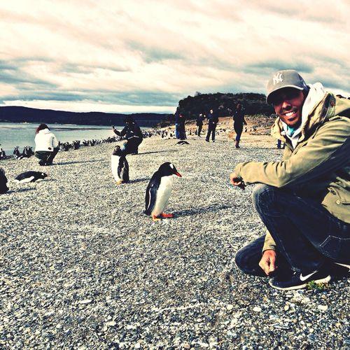 In Ushuaïa Pentagonia Argentina Pinguins