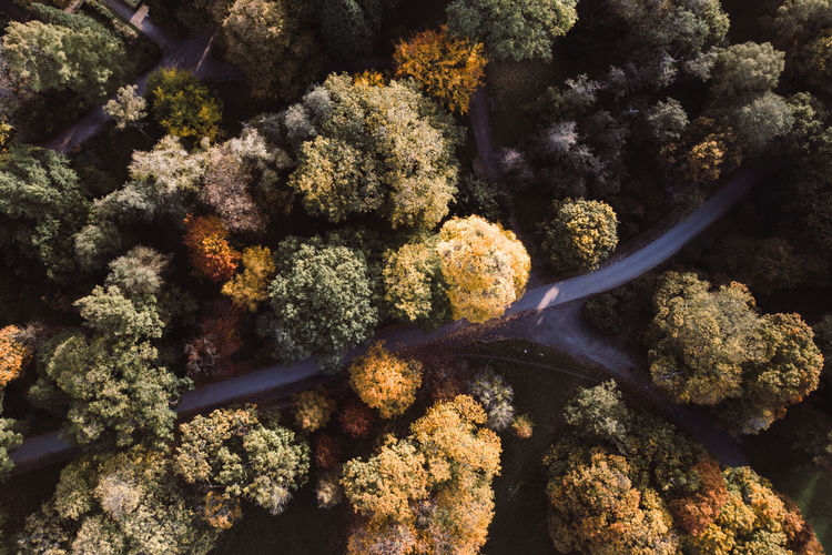 Drone view of road amidst trees