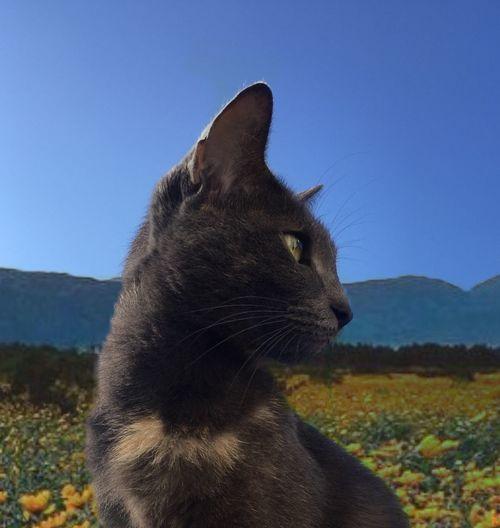 Bastet with flowers Flowers Bastet Cat Animal Themes Sky Nature