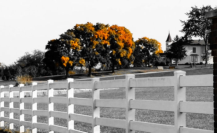 Tree Season  Built Structure Fence Travel Destinations Nature Day Outdoors Tranquility No People Samsung Galaxy S7 Edge Eye4photography  Autumn Rural Scene Landscapes Landscape Fenceline Orange Color Colorsplash Monochrome Photography Countryside Change TakeoverContrast