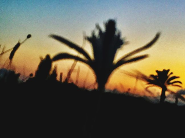 Landscape_photography EyeEm Gallery Eye4photography  EyeEm EyeEm Nature Lover From My Point Of View Sunset Plant Growth Beauty In Nature Sky Close-up Silhouette Nature Focus On Foreground Tranquility No People Scenics - Nature Fragility Freshness Selective Focus Flower Orange Color Flowering Plant