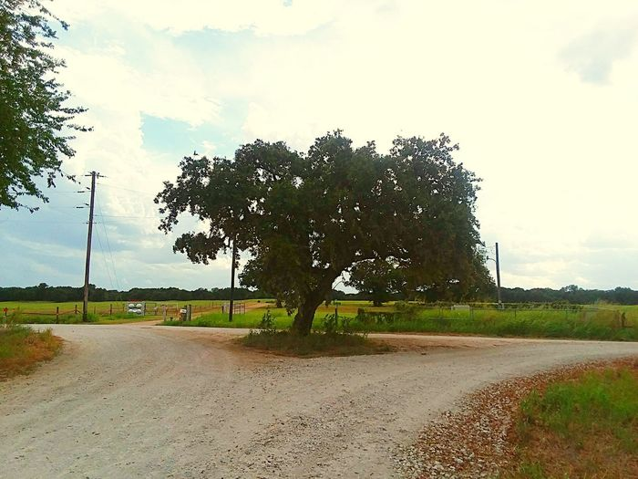 'The Tree' Dirt Road Back Road  Drive Tree Road Sky Cloud - Sky Countryside Empty Road Single Tree Country Road