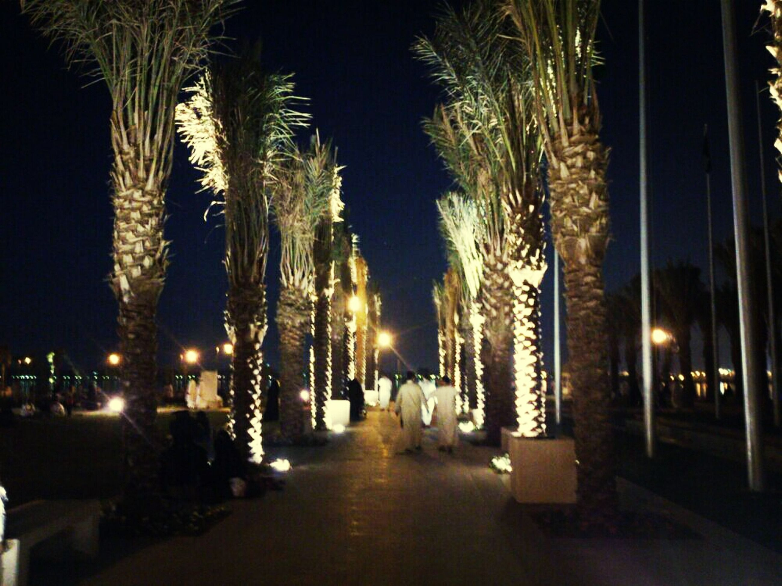 illuminated, night, the way forward, lighting equipment, street light, building exterior, architecture, street, built structure, tree, city, light - natural phenomenon, dark, diminishing perspective, road, glowing, outdoors, in a row, footpath, vanishing point