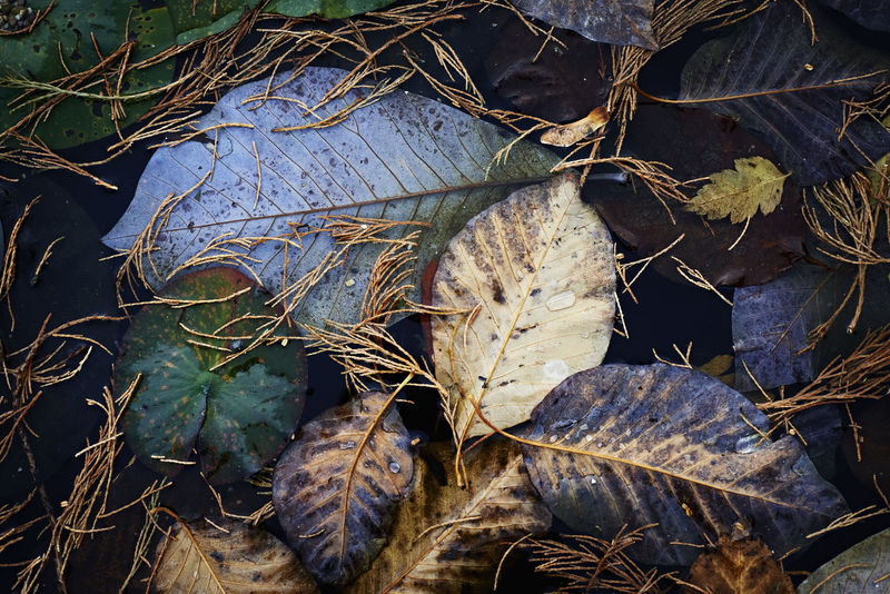 Leaves floating on dark water in autumn. Autumn Autumn Leaves Blue Blue Leaf Close-up Fall Beauty Fall Leaves Leaf Nature No People Outdoors