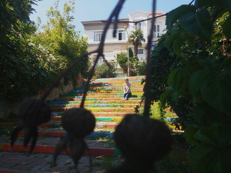 Buildings Burgazada Istanbul Turkey ıslands Stairs Green Colorful Colorful Photo Plants