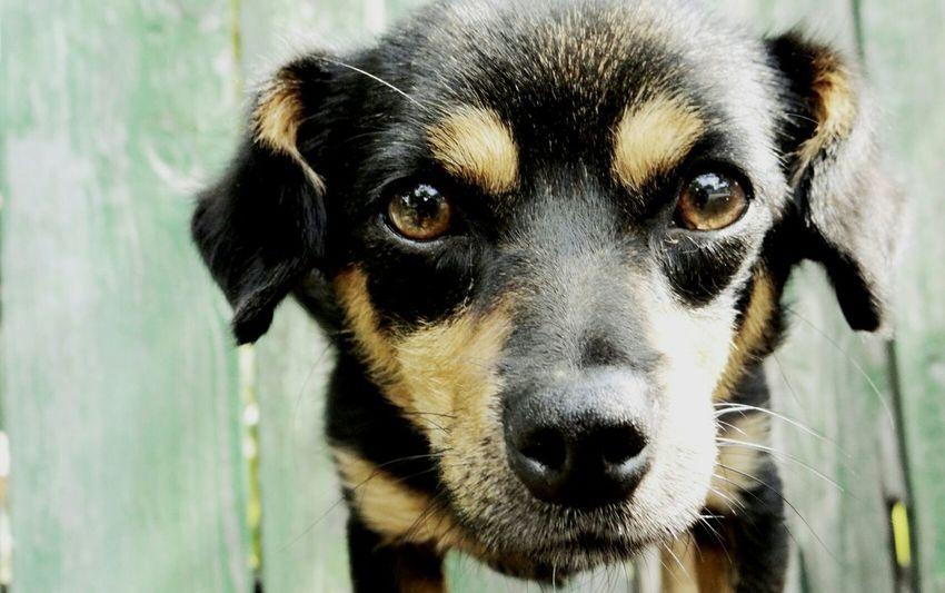 собака собака друг человека лапочка