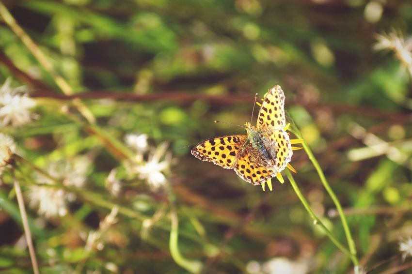 Focus On Foreground Beauty In Nature Butterfly 2016 September Niklas Showcase September Björkvik Sweden Swedish Nature Beauty In Nature Animal Themes Animals Insects  BYOPaper! The Week On EyeEm Perspectives On Nature Summer Exploratorium