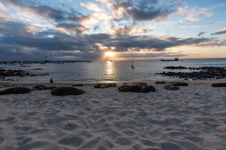 San Cristobal Galapagos Islands Galapagos Wonderful Nature Sealion  South America Marine Life Sunset Cloud - Sky Beach Sea Sun Dramatic Sky Sky Landscape Sand Water Horizon Over Water Beauty In Nature Nature Travel Destinations Swimming Outdoors