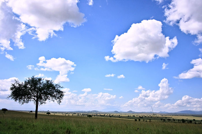 north Uganda near Kitgum Arid Climate Blue Brown Cloud Cloud - Sky Cloudscape Cloudy Distant Dramatic Sky Grass Landscape Mountains Nature No Animals No People Outdoors Panorama Panoramic Savannah Sky Sunny Turism View White Wood