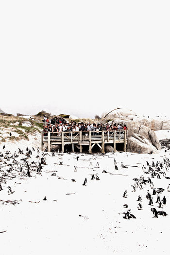 Crowd watching penguins on snow covered landscape from pier against sky
