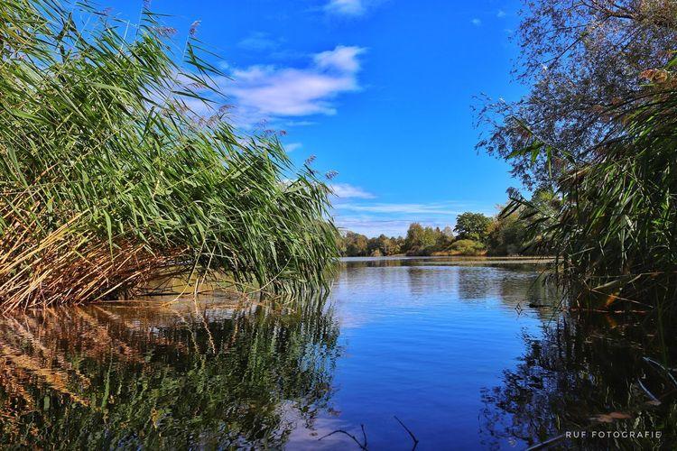 Tree Water Blue Lake Sky Cloud - Sky
