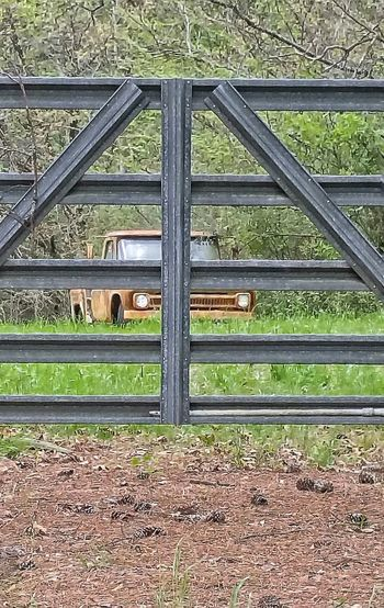 Day Outdoors Metal Protection No People Close-up Nature Fence Old Truck Rust Rusty Truck Antique Truck Vintage Cars Farm Farm Truck Overgrowth Metal Fence Rural Scene Countryside Platina Truck Chevy Truck Pine Straw Hidden Gems  Old Rusted Pickup
