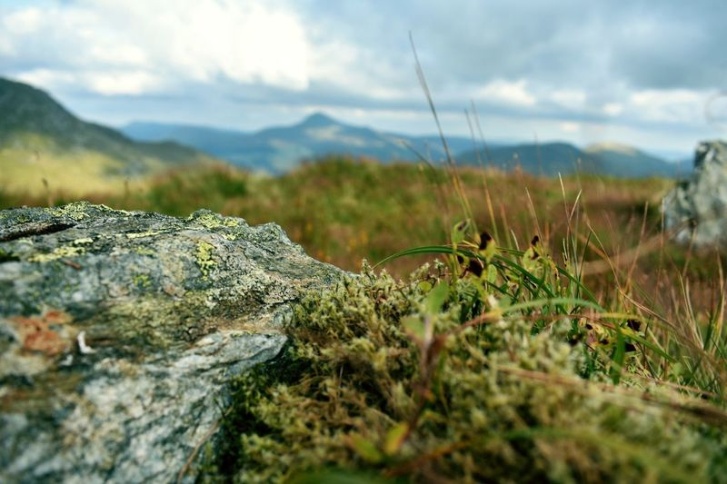 Nature Mountain Outdoors Tranquility Cloud - Sky Day Landscape Grass No People Tranquil Scene Scenics Sky Beauty In Nature Close-up EyeEmNewHere The Week On EyeEm EyeEm Best Edits EyeEm Selects EyeEmBestPics Beauty In Nature Arrochar Glasgow  Hill Walking Hikingadventures Lost In The Landscape