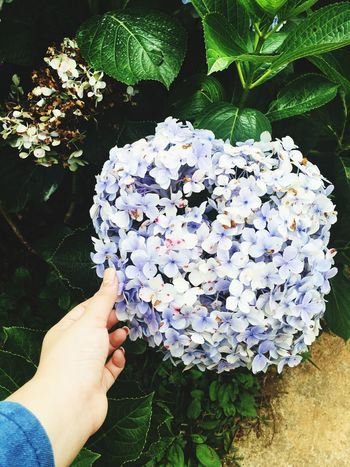 Human Hand Hand Real People One Person Holding Flower Plant