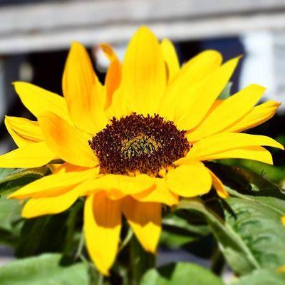 today is a beautiful day Flowers Flowersofinstagram Jeantalonmarket Montréal Montrealmoments Nikon MTL