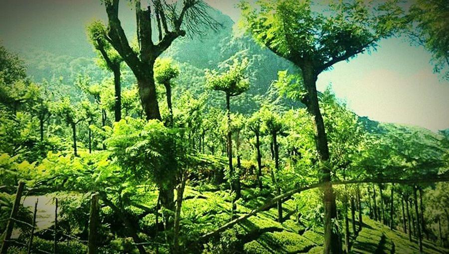 Valley Scenes Green Green Green!  Greenvalley Outdoors HillTopView Hillscape Ooty Beauty Sunnydelight
