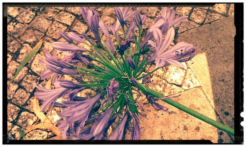 Taking Photos Enjoying Life Relaxing Nature Flowers
