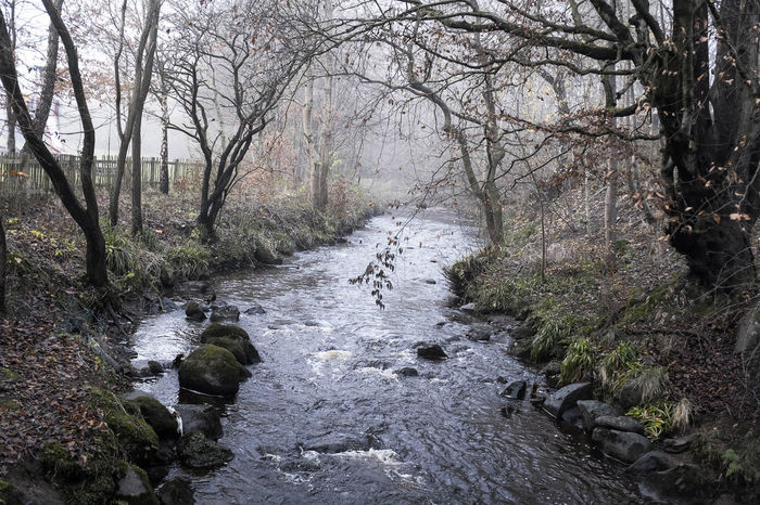 Beauty In Nature Branch Day Dull But Beautiful Foggy Foggy Morning Forest Grey Growth Nature No People Non-urban Scene Outdoors Plant Scenics Scotland Sky Tranquil Scene Tranquility Tree Tree Branches Water Winter Wintertime