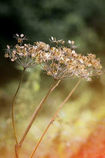 NewlandHallFishery Photography Photo Of The Day Nature Photography Londonphotography