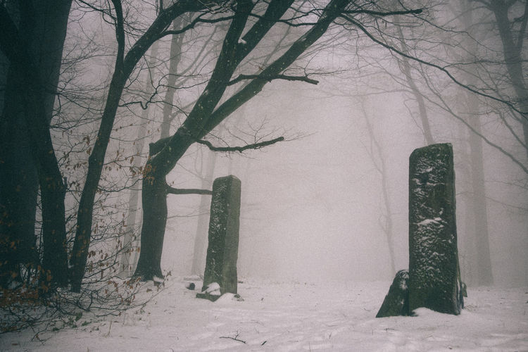Darkness Winter Mist Fog Woods Topography Snow No People Mystery Mysterious Place Eerie Dunwich Abandoned Ruins