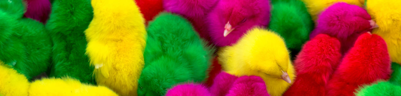 Colorful Chicks Chicks Animal Animal Themes Backgrounds Choice Close-up Colorful Colorful Animal Colorful Chicks Full Frame Green Color Multi Colored No People Pattern Yellow