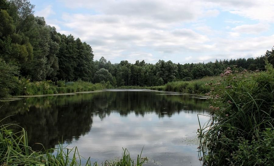 Landscape Lake Ukraine Water Wawes Trees Plants Beautiful Photo Canon Sky