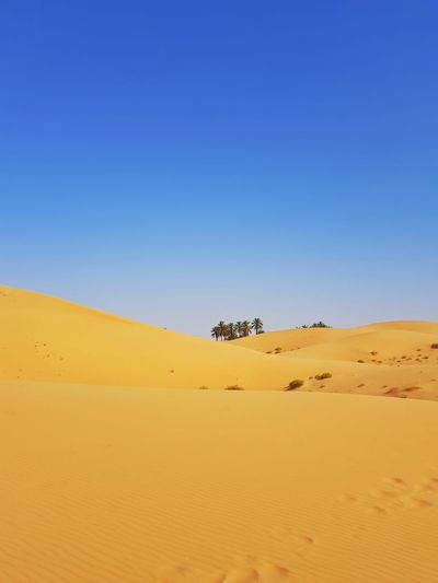 Sand Sand Dune Nature Animal Wildlife Desert Scenics Landscape Sky Yellow Outdoors Clear Sky Arid Climate No People Blue Horizon Over Land Day Beauty In Nature Animals In The Wild Full Length Animal Themes United Arab Emirates UAE Alain Travel Destinations Travel