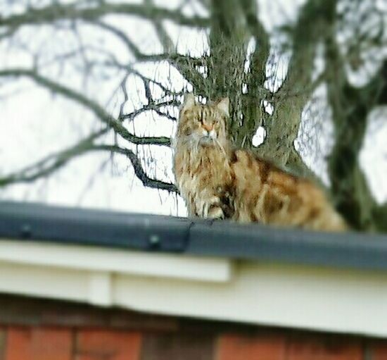 'who's looking at you...' Garden Shed Roof Cats Of EyeEm Cat Watching Catoftheday Cat Photography Cat
