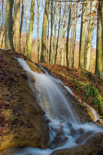 Small creek. Tree Water Waterfall Motion Forest Sky Landscape Flowing Water Stream
