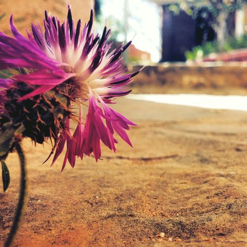 💜🌼👌✨Photography Art Flower Playing With Effects Followme ❤️ Follow Me On Instagram @_coco.ghz_