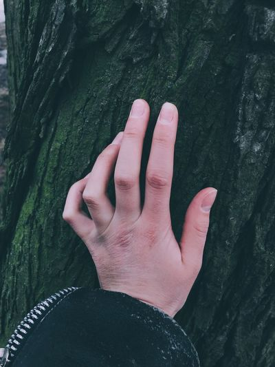 Cropped hand on tree trunk