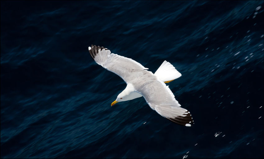 High Angle View Of Bird Flying Over Sea