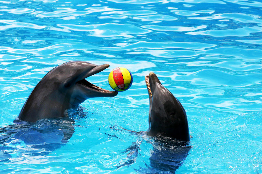 Animal Photography Animal Themes Animals Dolphins Game Nature Wather Zoology My Best Photo 2015 The Great Outdoors - 2017 EyeEm Awards