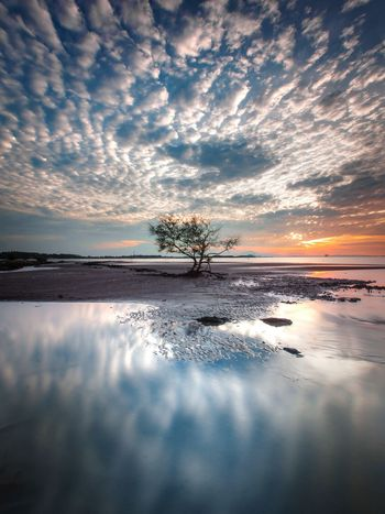 LONELY TREE REFLECTION Sea Reflection Sunset Beach Water Dramatic Sky Dramatic Landscape Longexposure sSunrise Lonely Tree Tree Trees Beautiful Beautiful Nature