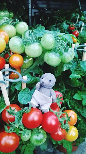 Tomato-Tis Tis❣ I LOVE PHOTOGRAPHY Taking Photos Hanging Out Tomato Enjoying Life Cheese Hello World Hi! Check This Out Things I Like