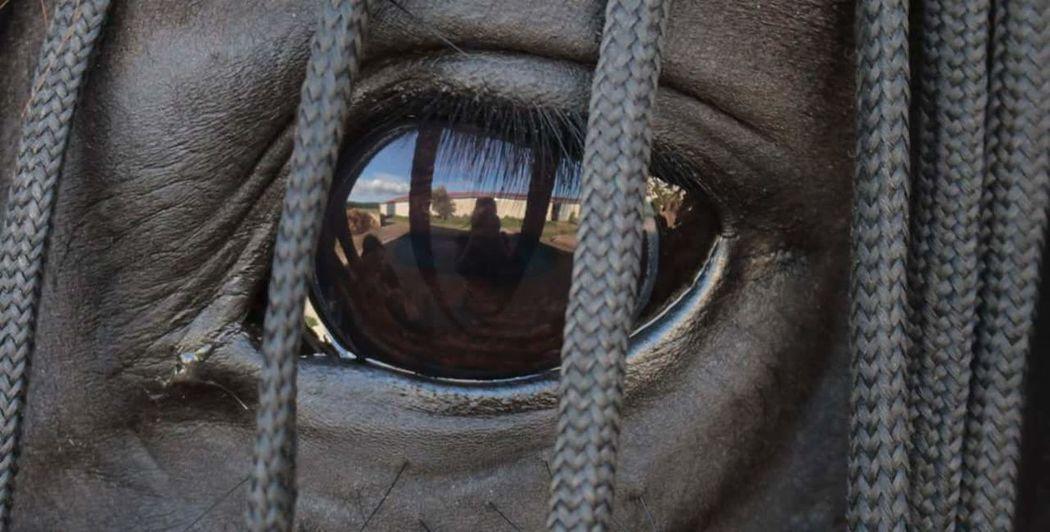 Horse Horse Photography  Horseeye Pet Portraits