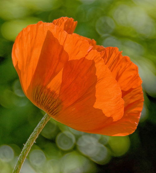 Nature Flower Flowers Orange Color Petal Fragility Plant Flower Head Beauty In Nature Close-up Freshness No People Day Outdoors Growth Blumen Природа цветы цветок  Flower Collection Flower Photography Flower Portrait EyeEm Nature Lover EyeEm Gallery Flowers In Park Summer Exploratorium