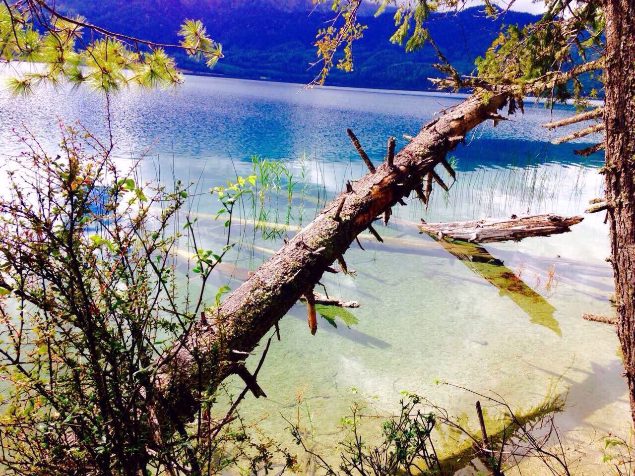 water, lake, nature, tree, beauty in nature, tranquil scene, tranquility, reflection, no people, outdoors, plant, branch, scenics, day, growth, flower, sky