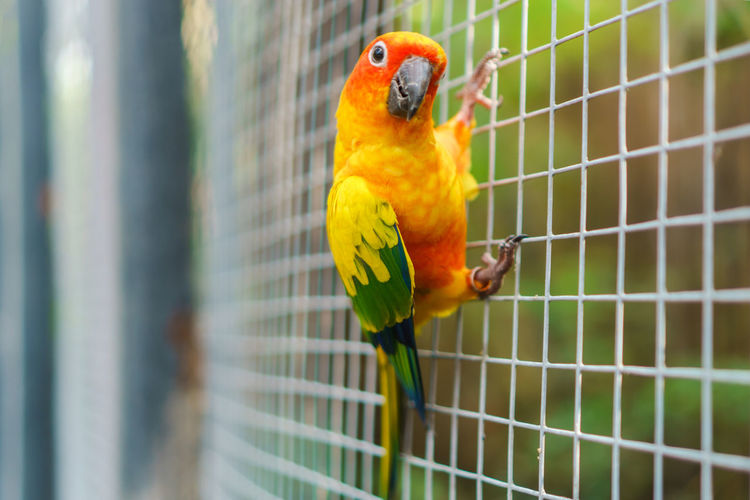 Animal Themes Animals In The Wild Beauty In Nature Bird Birdcage Cage Close-up Day Gold And Blue Macaw Macaw Multi Colored Nature No People Outdoors Parrot Perching Rainbow Lorikeet